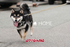 2020 5 15 STAY HOME 004